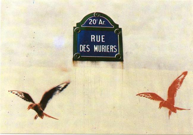 Rue des Muriers